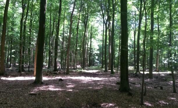 Klecker Wald